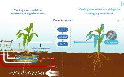 Nieuwe biobladmeststof maakt flinke reductie stikstof mogelijk